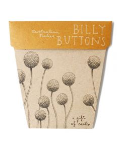 Billy Buttons Gift of Seeds - Sow 'n Sow