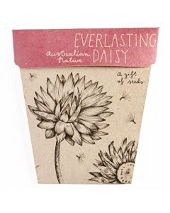 Everlasting Daisy Gift of Seeds - Sow 'n Sow